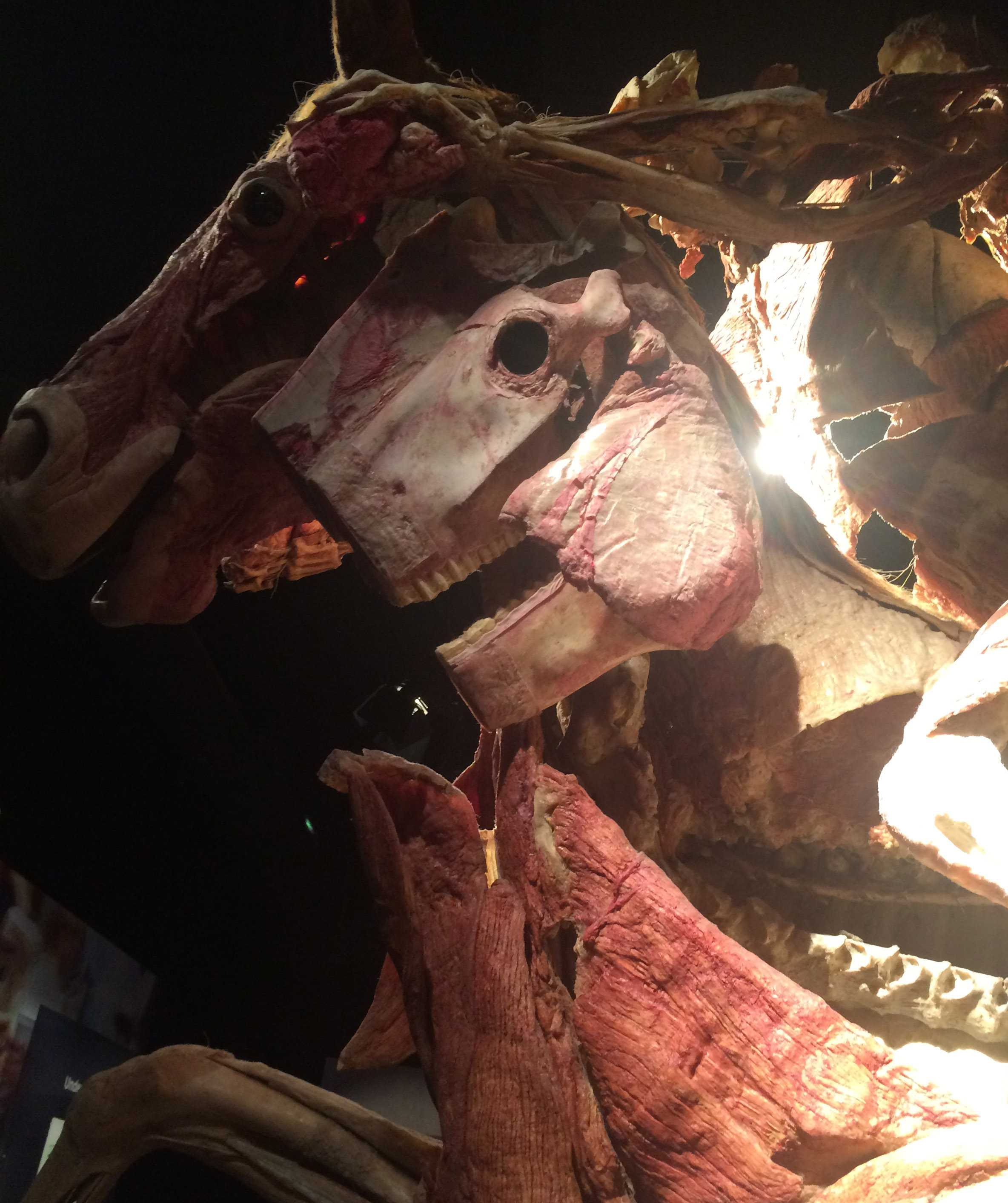 Up Close & Personal: Anatomy Class Visits Body Worlds Exhibit – The ...