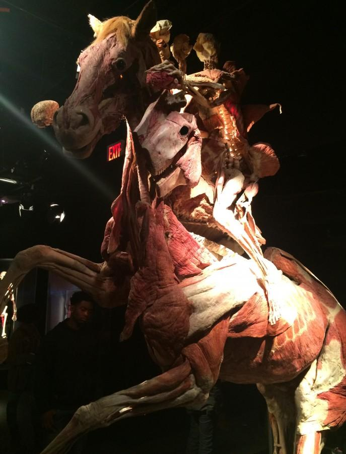 Up Close & Personal: Anatomy Class Visits Body Worlds Exhibit