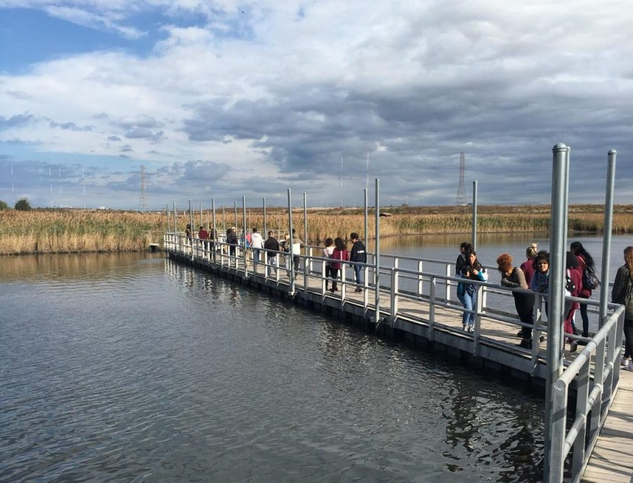 Lessons on the Environment: Students Study Wind, Metals and Birds